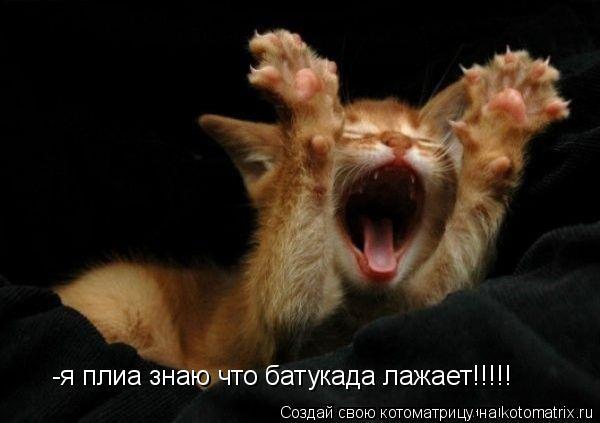 Котоматрица: -я плиа знаю что батукада лажает!!!!!