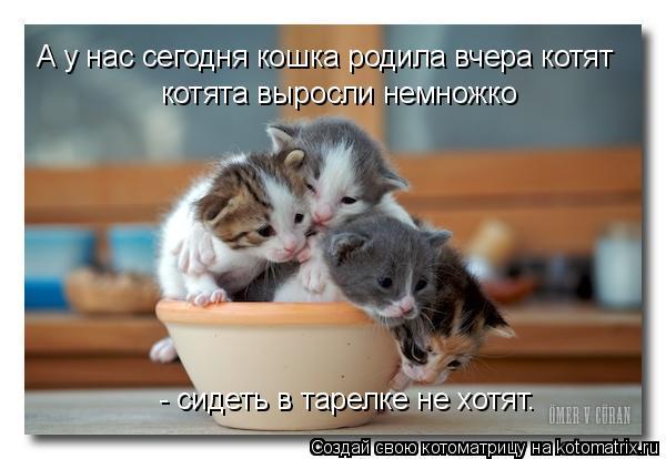 Котоматрица: А у нас сегодня кошка родила вчера котят котята выросли немножко - сидеть в тарелке не хотят.