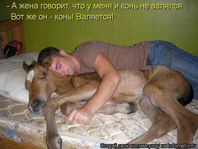 Котоматрица: - А жена говорит, что у меня и конь не валялся.. Вот же он - конь! Валяется!