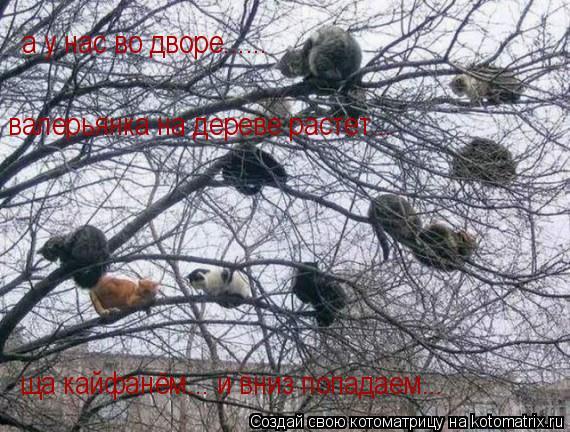 Котоматрица: а у нас во дворе...... валерьянка на дереве растет... ща кайфанём... и вниз попадаем...