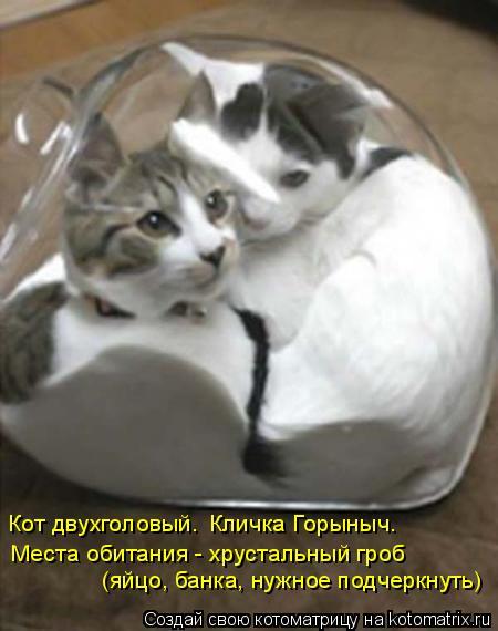 Котоматрица: Места обитания - хрустальный гроб  (яйцо, банка, нужное подчеркнуть) Кот двухголовый. Кличка Горыныч.