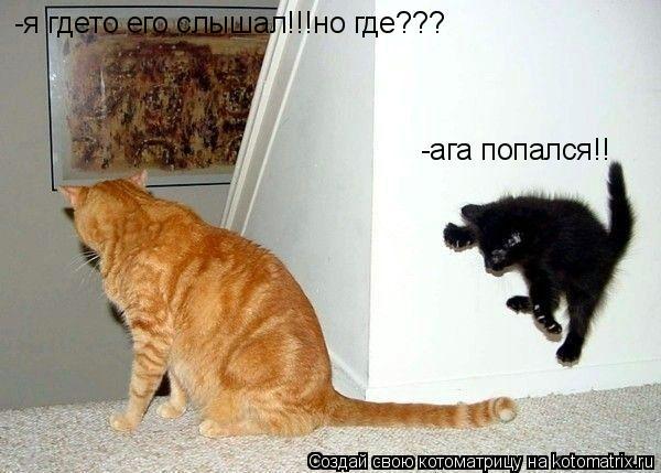 Котоматрица: -я гдето его слышал!!!но где??? -ага попался!!