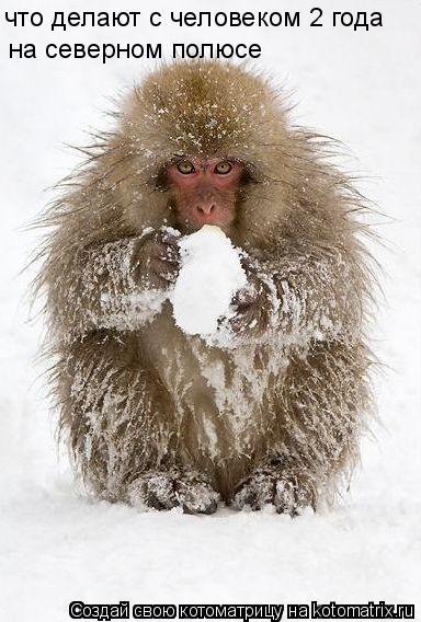 Котоматрица: что делают с человеком 2 года на северном полюсе