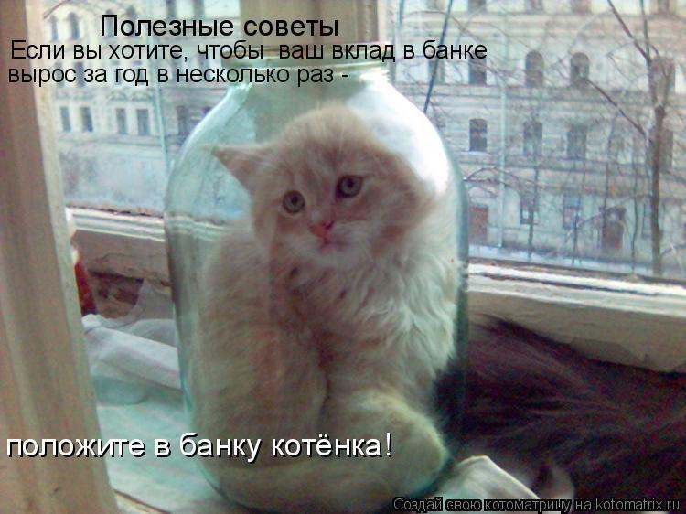 Котоматрица: Полезные советы  Если вы хотите, чтобы  ваш вклад в банке  вырос за год в несколько раз - положите в банку котёнка!