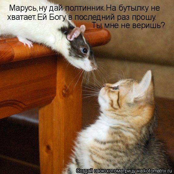 Котоматрица: Марусь,ну дай полтинник.На бутылку не  хватает.Ей Богу в последний раз прошу. Ты мне не веришь?