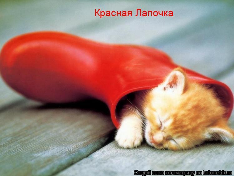 Котоматрица: Красная Лапочка