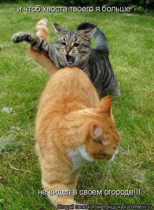 Котоматрица: - и чтоб хвоста твоего я больше  не видел в своем огороде!!!