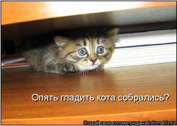 Котоматрица: Опять гладить кота собрались?