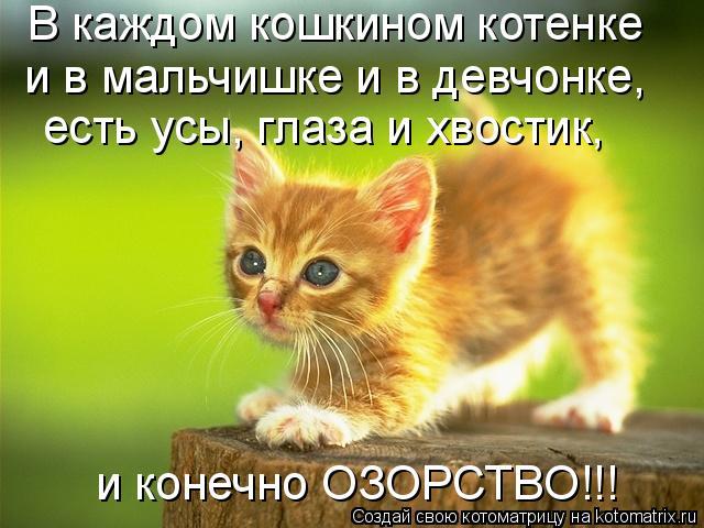 Котоматрица: В каждом кошкином котенке  и в мальчишке и в девчонке, есть усы, глаза и хвостик, и конечно ОЗОРСТВО!!!