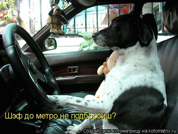 Котоматрица: Шэф до метро не подбросиш?