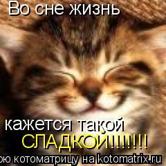 Котоматрица: Во сне жизнь кажется такой СЛАДКОЙ!!!!!!!