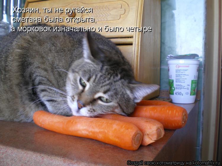 Котоматрица: Хозяин, ты не ругайся сметана была открыта,  а морковок изначально и было четыре