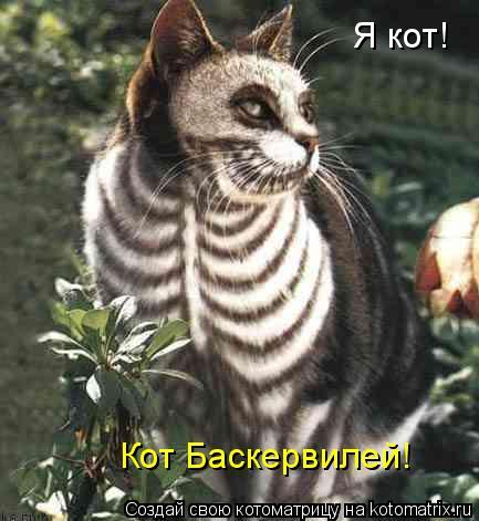 Котоматрица: Я кот! Кот Баскервилей!