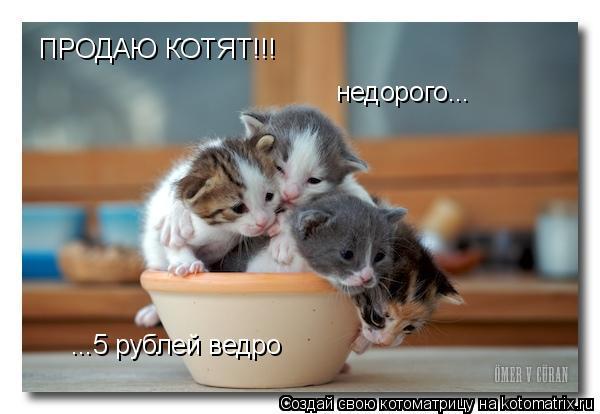 Котоматрица: ПРОДАЮ КОТЯТ!!! недорого... ...5 рублей ведро