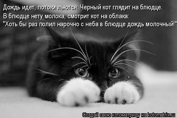 """Котоматрица: Дождь идет, потоки льются. Черный кот глядит на блюдце. В блюдце нету молока, смотрит кот на облака: """"Хоть бы раз полил нарочно с неба в блюдце"""
