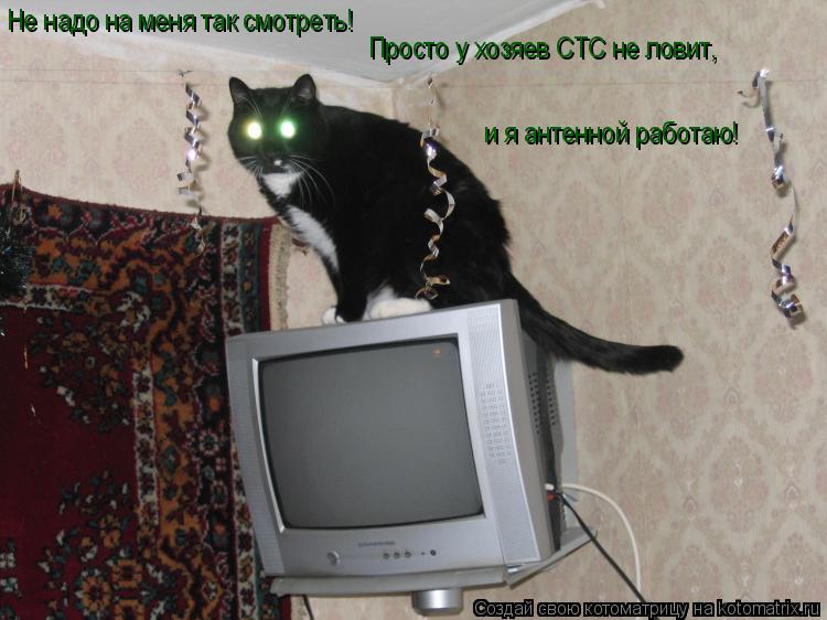 Котоматрица: Не надо на меня так смотреть! Просто у хозяев СТС не ловит,  и я антенной работаю!