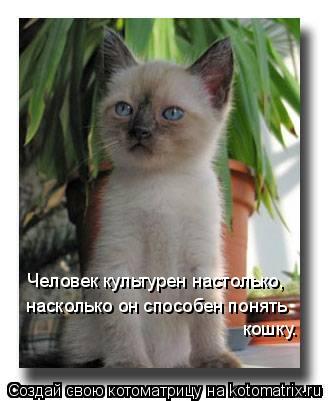 Котоматрица: Человек культурен настолько, насколько он способен понять  кошку.