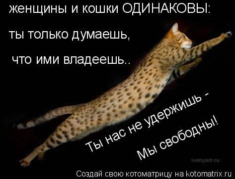 Котоматрица: женщины и кошки ОДИНАКОВЫ: ты только думаешь,  что ими владеешь.. Ты нас не удержишь -  Мы свободны!