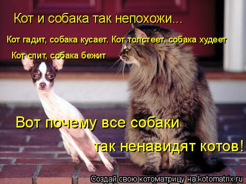 Котоматрица: Кот и собака так непохожи... Кот гадит, собака кусает. Кот толстеет, собака худеет Кот спит, собака бежит Вот почему все собаки  так ненавидят