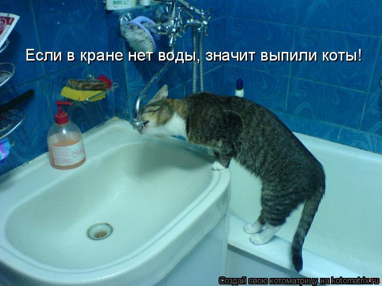 Котоматрица: Если в кране нет воды, значит выпили коты!
