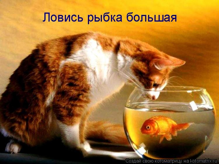Котоматрица: Ловись рыбка большая