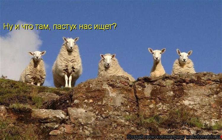 Котоматрица: Ну и что там, пастух нас ищет?