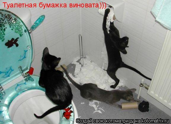 Котоматрица: Туалетная бумажка виновата)))