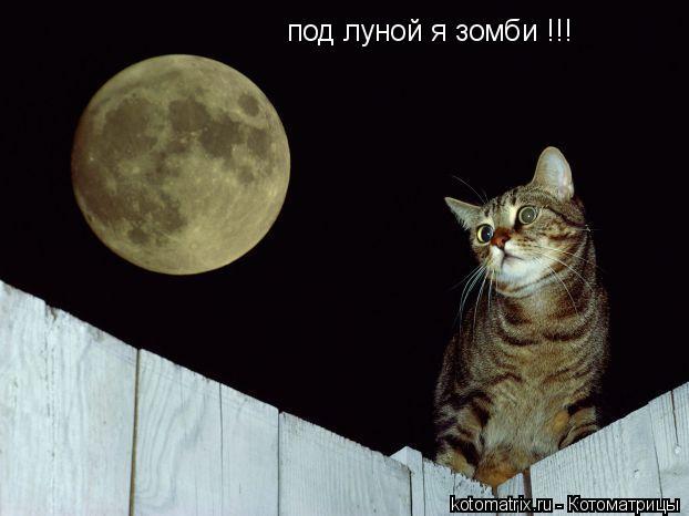 Котоматрица: под луной я зомби !!!