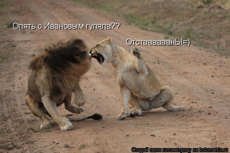 Котоматрица: Опять с Ивановым гуляла?? ОтстаааааанЬ!=)