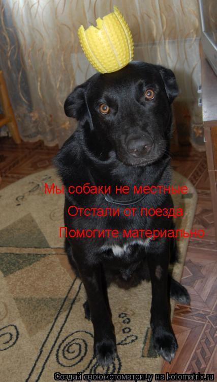 Котоматрица: Мы собаки не местные Отстали от поезда Помогите материально