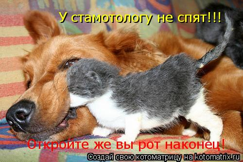 Котоматрица: У стамотологу не спят!!! Откройте же вы рот наконец!