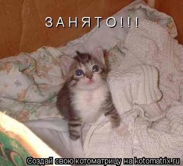Котоматрица: З А Н Я Т О ! ! !