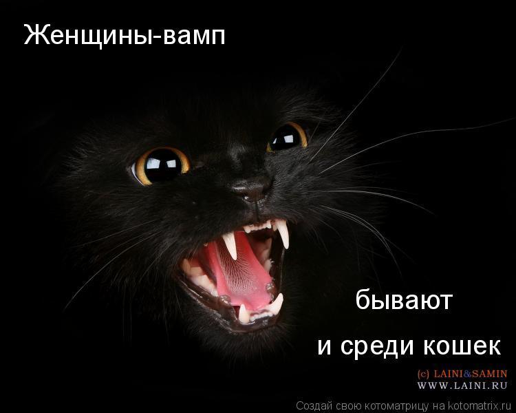 Котоматрица: Женщины-вамп бывают и среди кошек