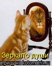 Котоматрица: Зеркало души