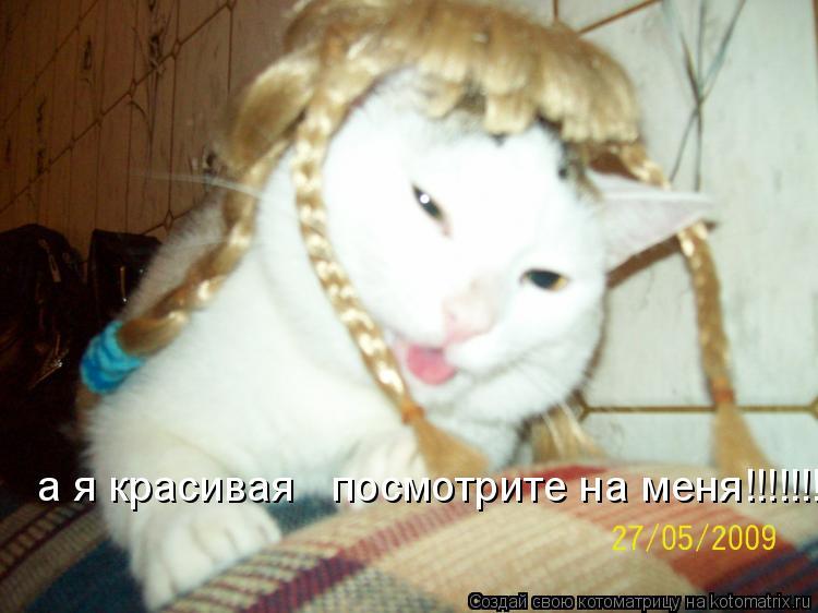 Котоматрица: а я красивая   посмотрите на меня!!!!!!!!!!!!!!!!!!!!!!!!!!!!!!!!!!!!!