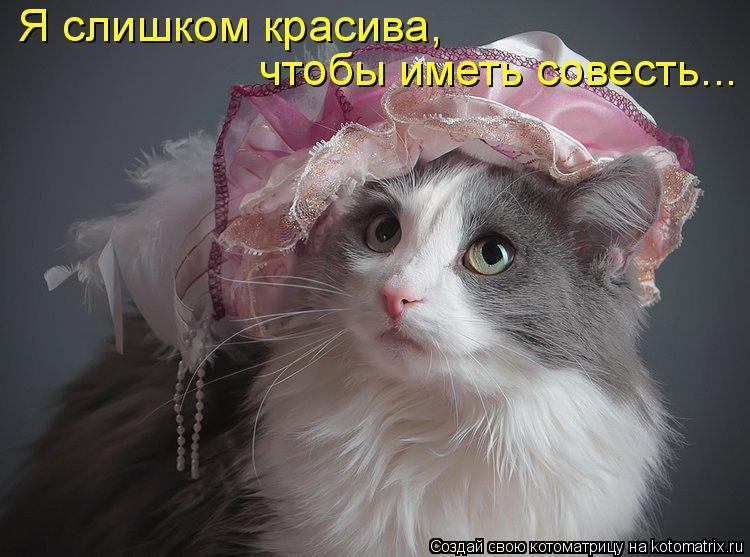 Котоматрица: Я слишком красива, чтобы иметь совесть...