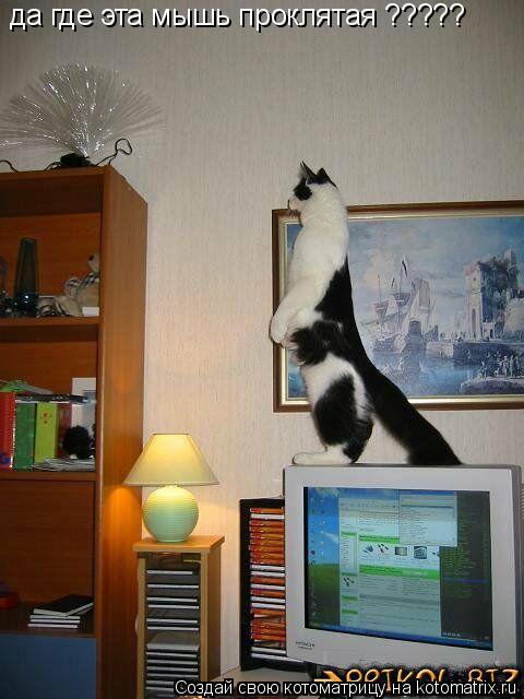 Котоматрица: да где эта мышь проклятая ?????