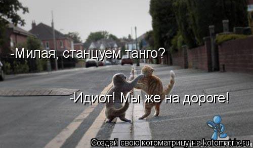 Котоматрица: -Милая, станцуем танго? -Идиот! Мы же на дороге!