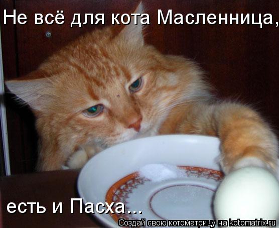 Котоматрица: Hе всё для кота Масленница, есть и Пасха...