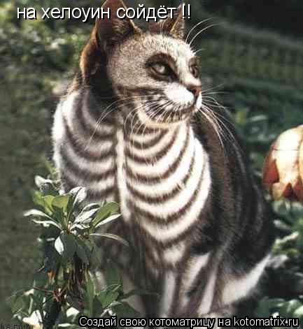 Котоматрица: на хелоуин сойдёт !!