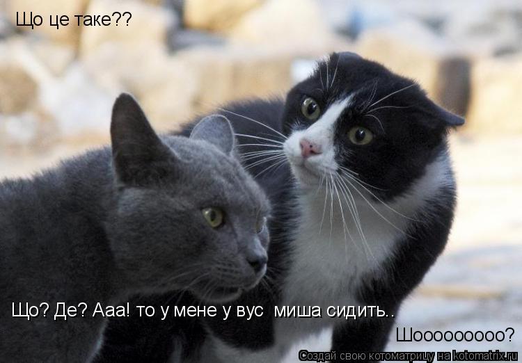 Котоматрица: Що це таке?? Що? Де? Ааа! то у мене у вусі миша сидить.. Шооооооооо?