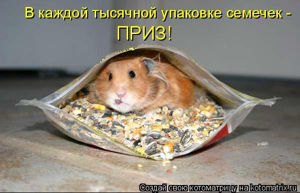 Котоматрица: В каждой тысячной упаковке семечек -  ПРИЗ!