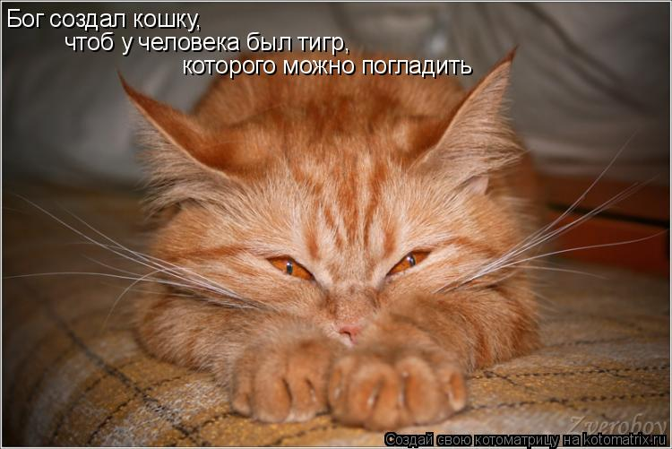 Котоматрица: Бог создал кошку, чтоб у человека был тигр,  которого можно погладить