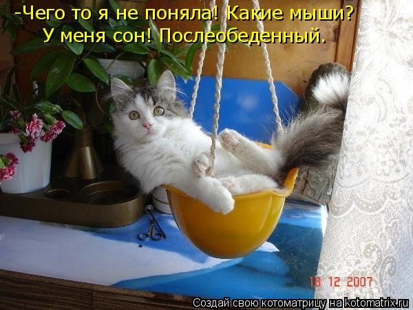 Котоматрица: -Чего то я не поняла! Какие мыши? У меня сон! Послеобеденный.