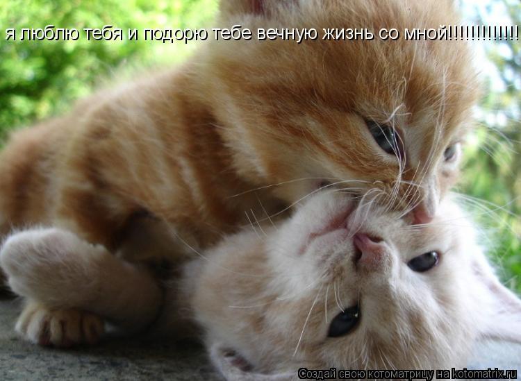 Котоматрица: я люблю тебя и подорю тебе вечную жизнь со мной!!!!!!!!!!!!!!!!!!!!!!!!!!!!