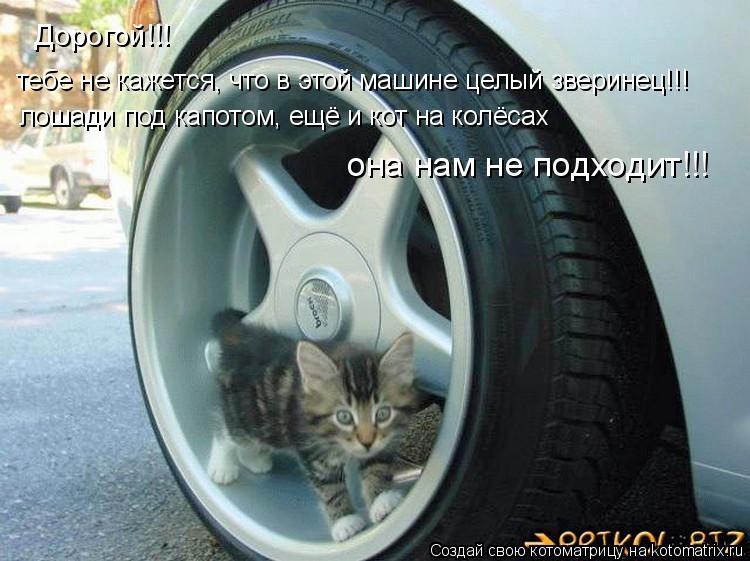 Котоматрица: Дорогой!!! лошади под капотом, ещё и кот на колёсах тебе не кажется, что в этой машине целый зверинец!!!  она нам не подходит!!!