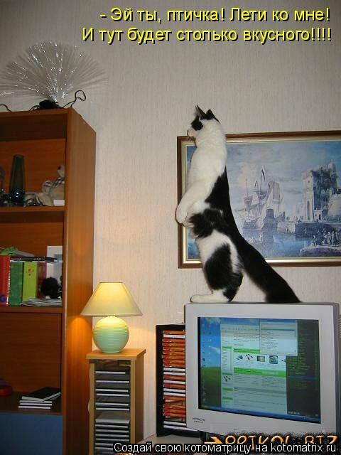 Котоматрица: - Эй ты, птичка! Лети ко мне! И тут будет столько вкусного!!!!