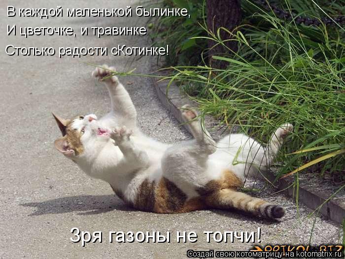 Котоматрица: В каждой маленькой былинке,  И цветочке, и травинке Столько радости сКотинке! Зря газоны не топчи!