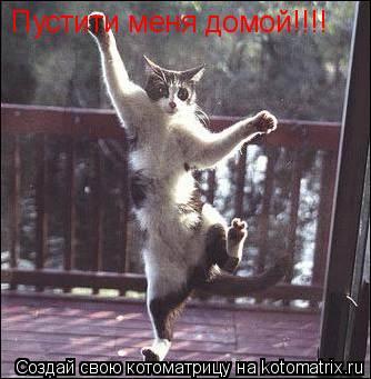Котоматрица: Пустити меня домой!!!!
