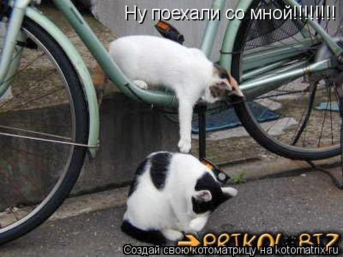 Котоматрица: Ну поехали со мной!!!!!!!!